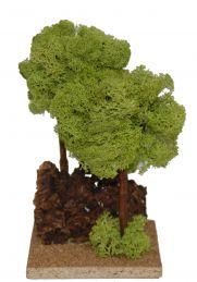 Pino doppio lichene