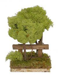 Gruppo 2 pini licheni
