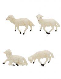 6 pecore