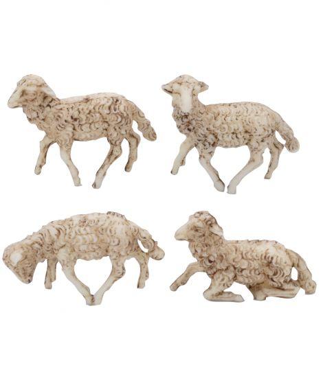 12 pecore